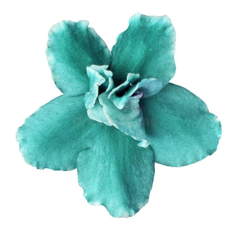 Viola ciánica de la flor interior aislada en el fondo blanco Primer Macro Elemento del diseño fotografía de archivo libre de regalías