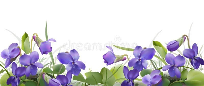 Viola odorata. stock illustration