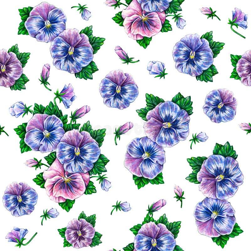 Viola tricolora Dibujo colorido de las flores de los pensamientos de la acuarela Modelo de flores inconsútil de la acuarela stock de ilustración