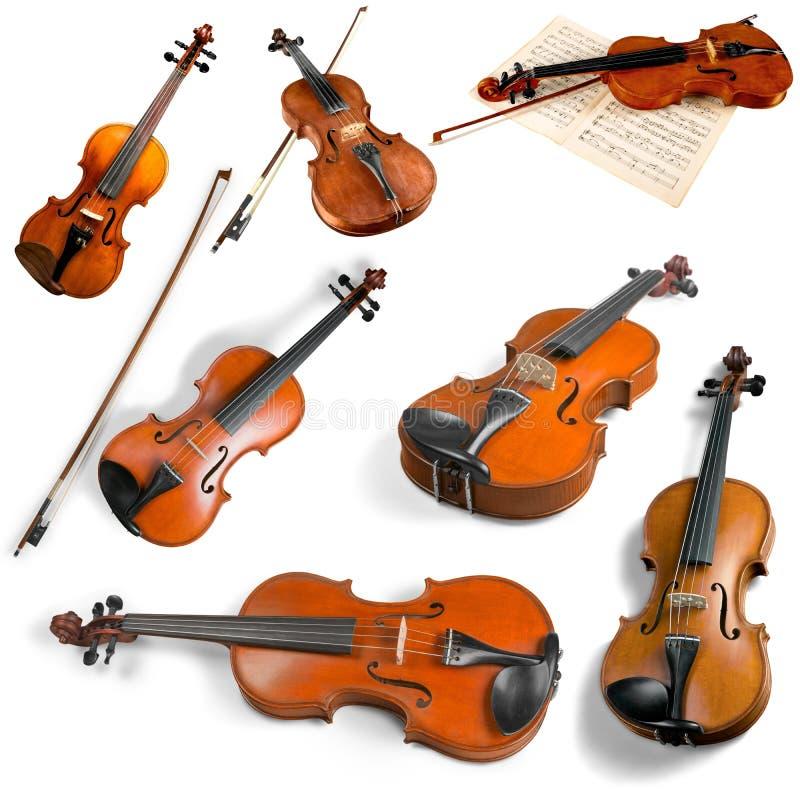Violas και βιολιά στοκ εικόνα με δικαίωμα ελεύθερης χρήσης