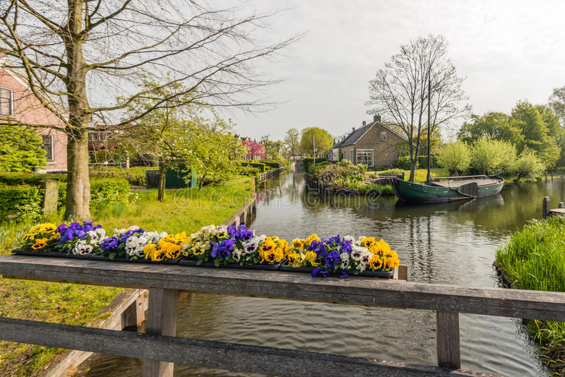 Violas blooming on a wooden bridge railing. Bright blooming violas on a wooden bridge railing in the foreground of a canal in the Dutch village of Drimmelen royalty free stock photos
