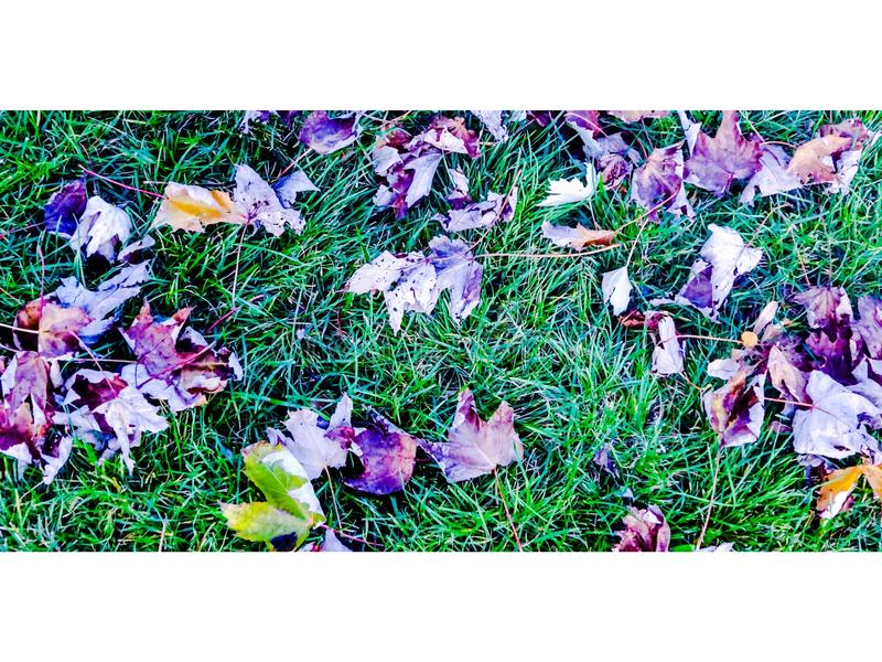 Violet Autumn fotografia stock libera da diritti