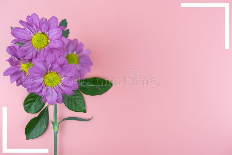 Violet bloemen en kader met exemplaarruimte op roze achtergrond stock foto