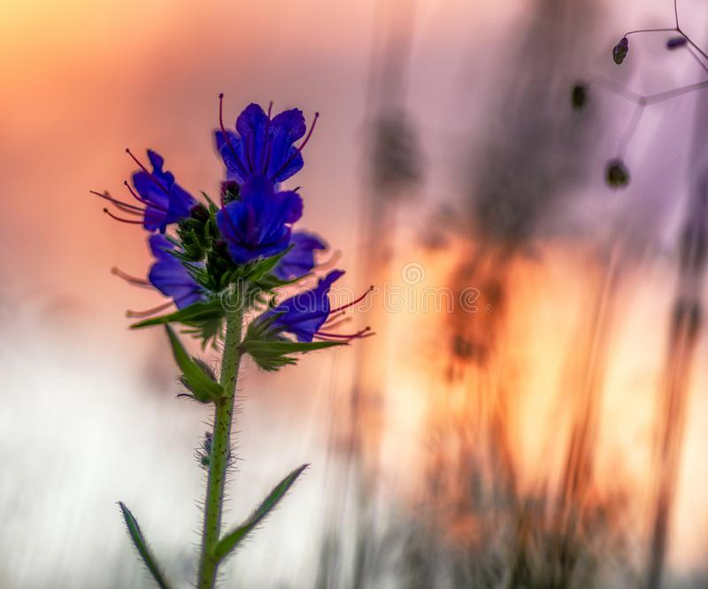 Violet blooming flower and colorful sky stock images