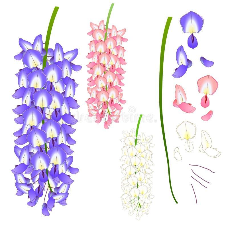 Violet Blue Pink och vit Wisteria också vektor för coreldrawillustration bakgrund isolerad white stock illustrationer