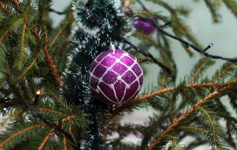 Violet brilliant sphere hangs on a New Year`s fir-tree stock photo