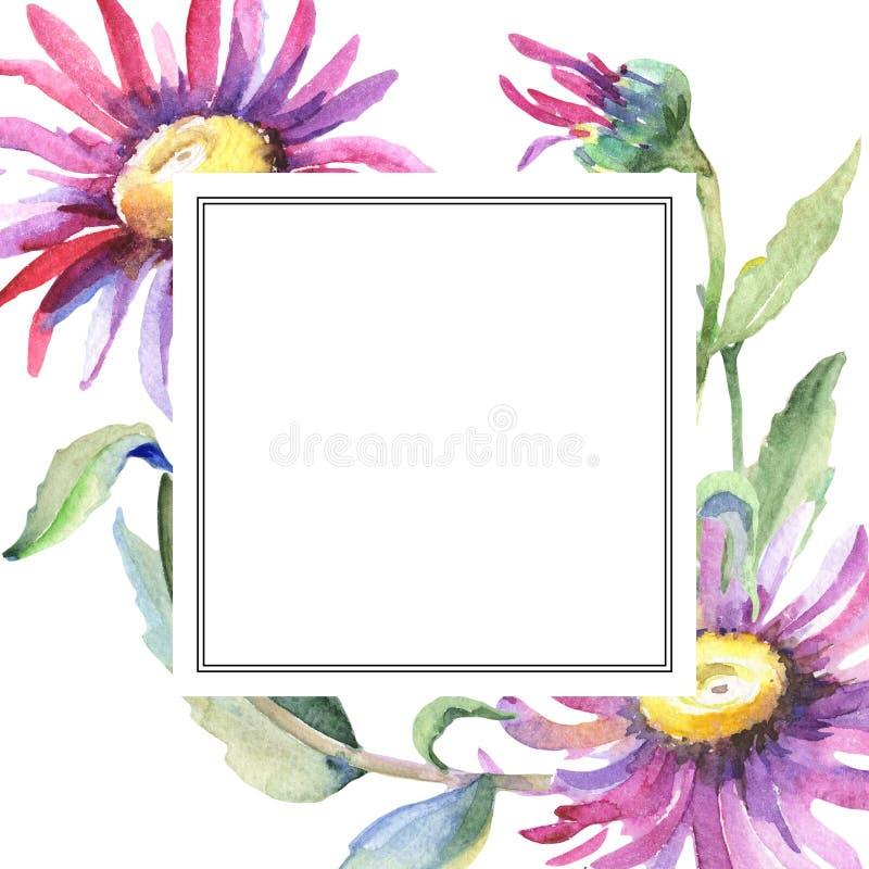 Violet chamomile. Floral botanical flower. Wild spring leaf wildflower frame. Aquarelle wildflower for background, texture, wrapper pattern, frame or border royalty free illustration