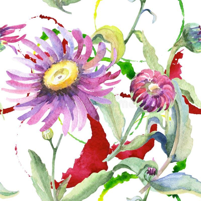 Violet chamomile. Floral botanical flower. Wild spring leaf wildflower pattern. Aquarelle wildflower for background, texture, wrapper pattern, frame or border vector illustration