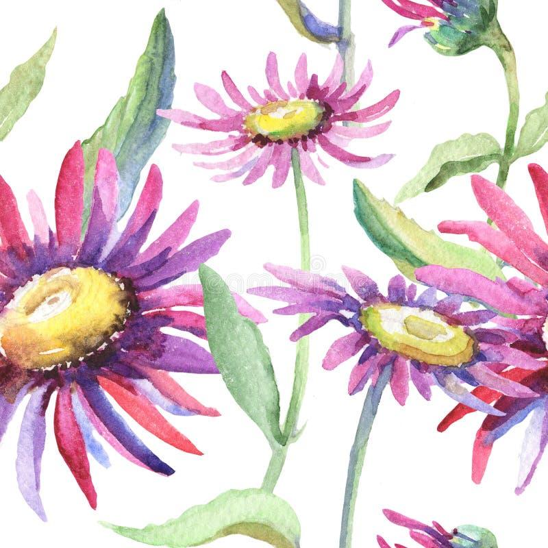 Violet chamomile. Floral botanical flower. Wild spring leaf wildflower pattern. Aquarelle wildflower for background, texture, wrapper pattern, frame or border stock illustration