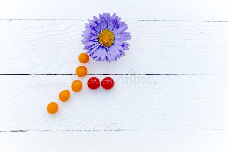 Violet Chrysanthemum stam och sidor av körsbärsröda tomater royaltyfria foton