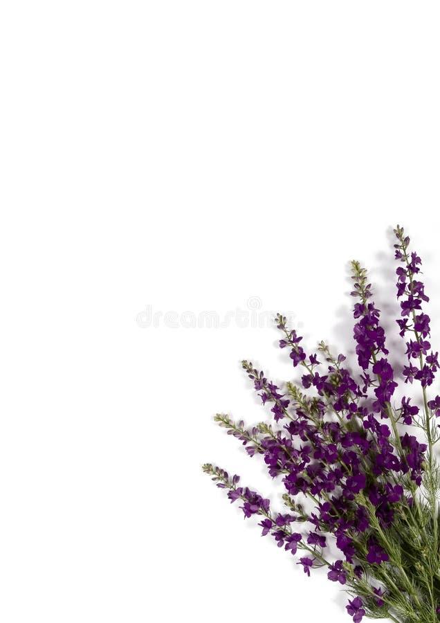 Download Violet corner stock photo. Image of border, floral, plants - 5342196