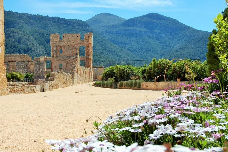 Violet daisies flowers, orange trees, green mountains and the ancient historic ruins of Simat de la Valldigna Monastery. royalty free stock photo