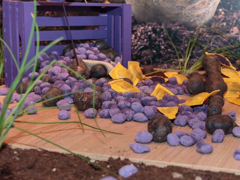 Violet Dumplings, nouvelles pâtes italiennes de Violet Potato photographie stock