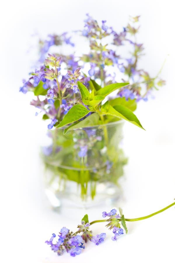 Violet en groen boeket van salie en pepermunt royalty-vrije stock fotografie