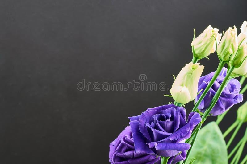 Violet eustoma flowers close up macro shot. Violet eustoma flowers close up macro shot royalty free stock image
