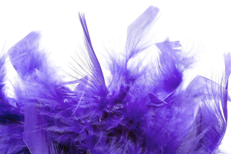Violet feathers. And fluff over white background stock image