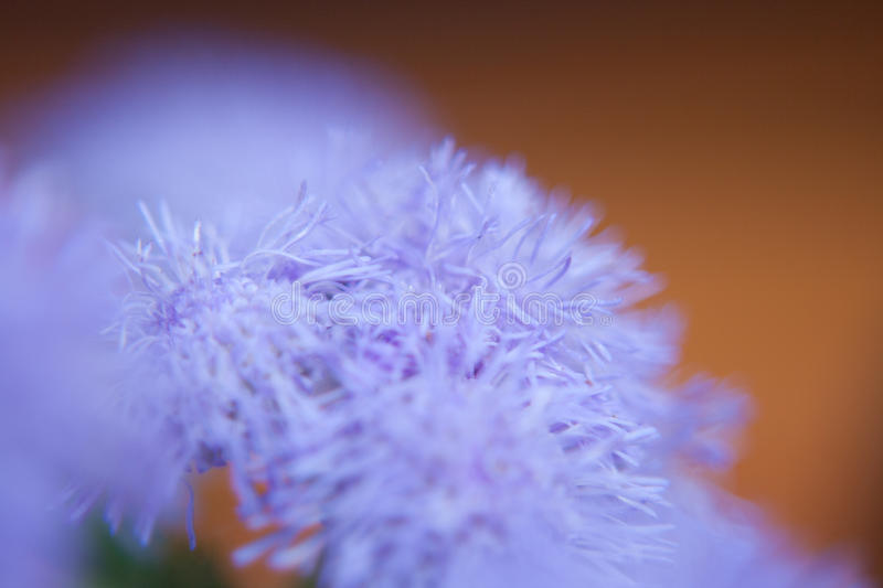 Violet flower royalty free stock photography