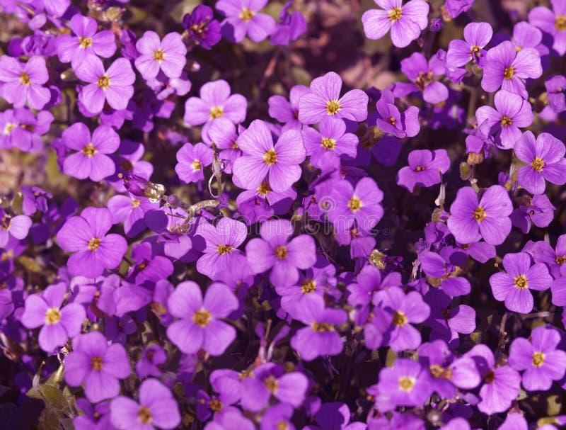 Violet flower back stock photography