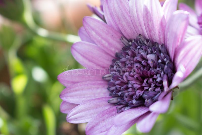 Violet flower back loock stock image