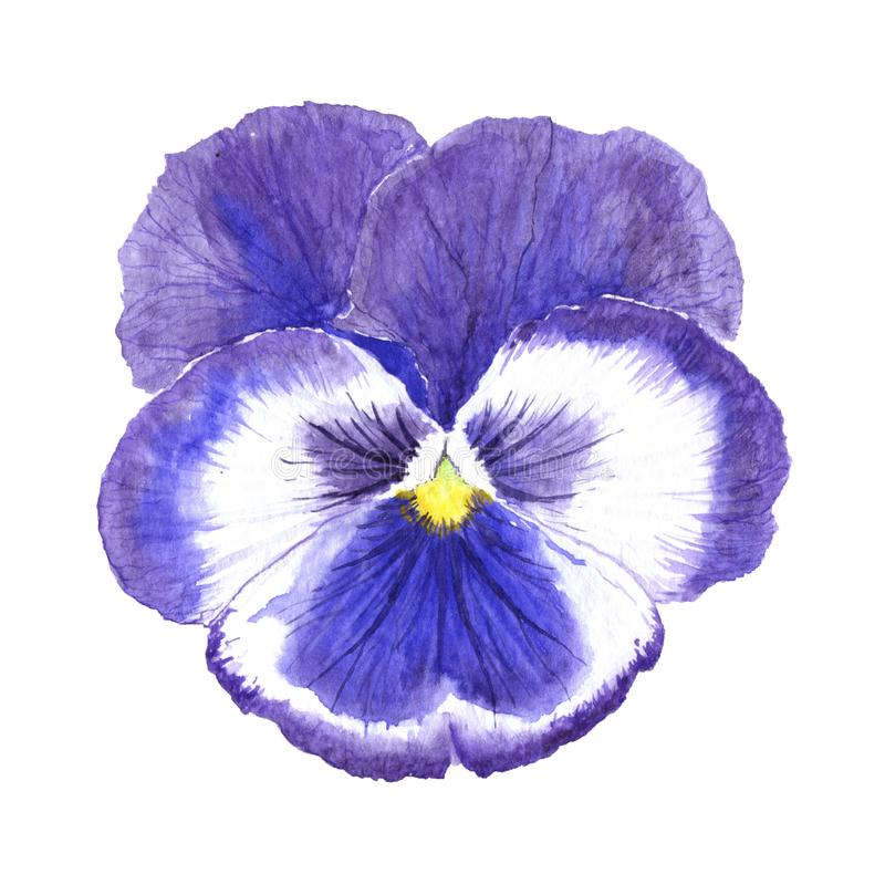 Violet flower close up. royalty free stock photo