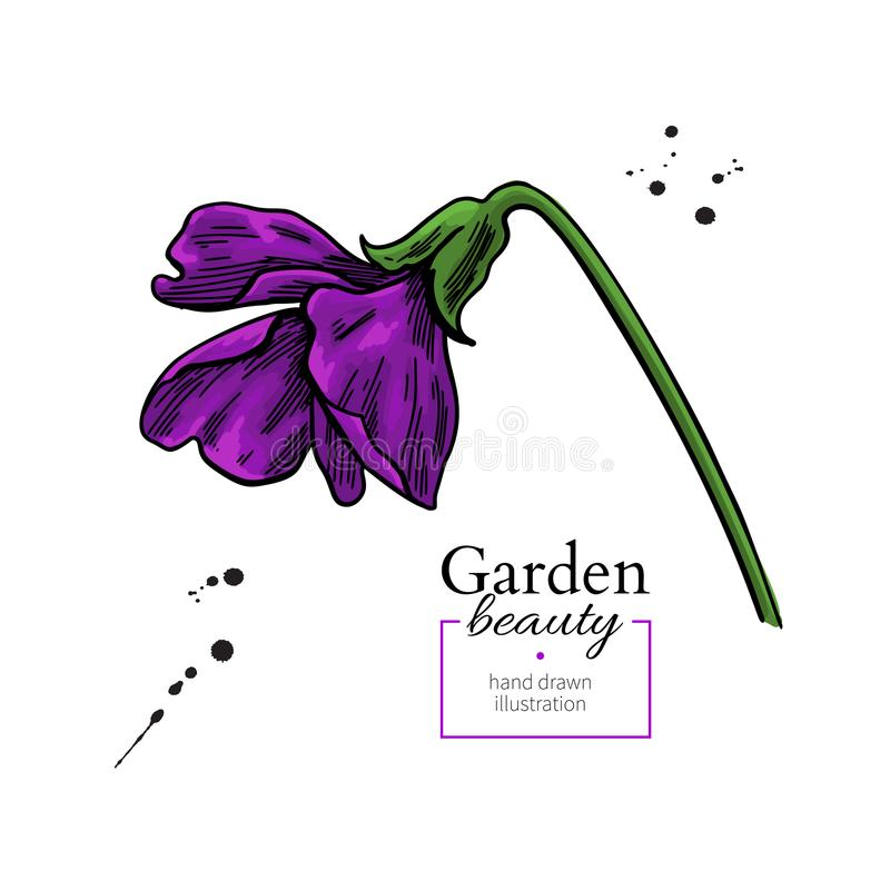 Violet flower drawing. Vector hand drawn floral object. Viola sketch. Wild botanical garden bloom. Great for decor, label, icon, greeting cards stock illustration