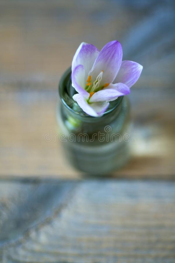 Violet flower in a glass vessel against. A background of blurred stock photography