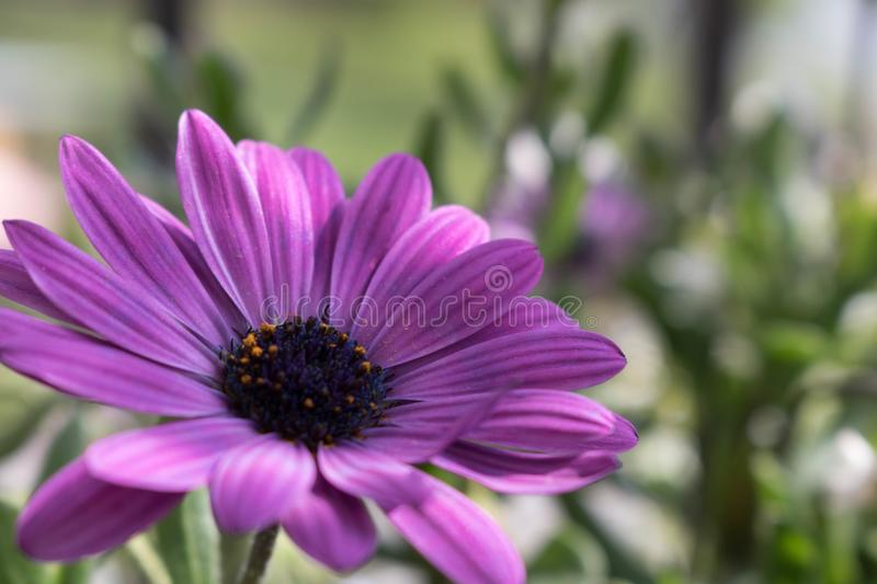 Violet flower and nice background stock image