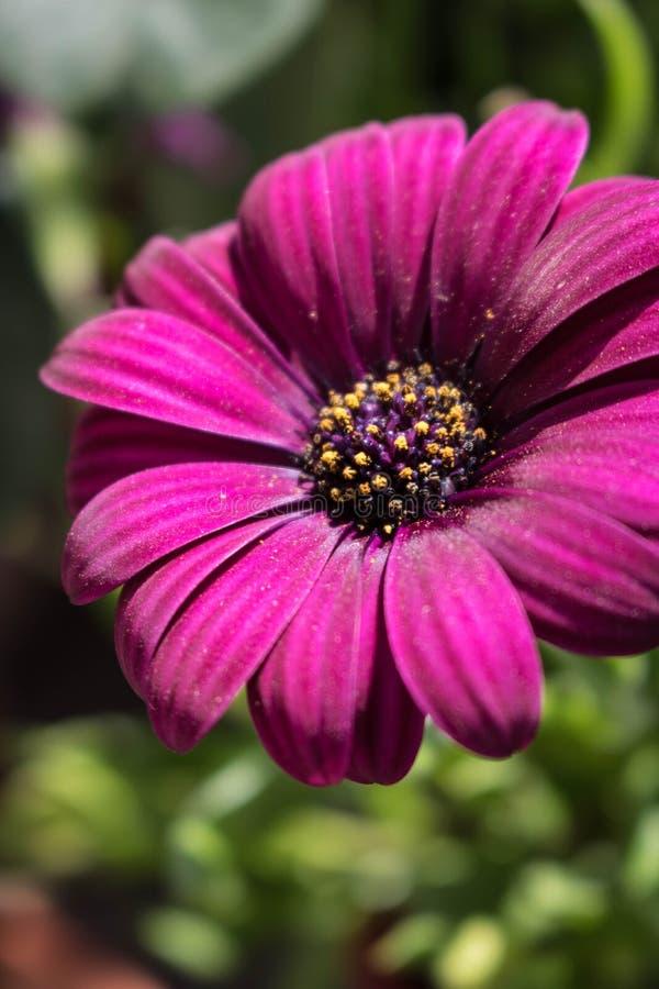 Violet flower sun bathing stock image