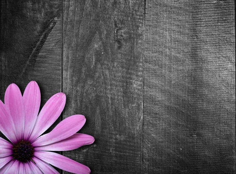 Violet flower on wooden background stock image