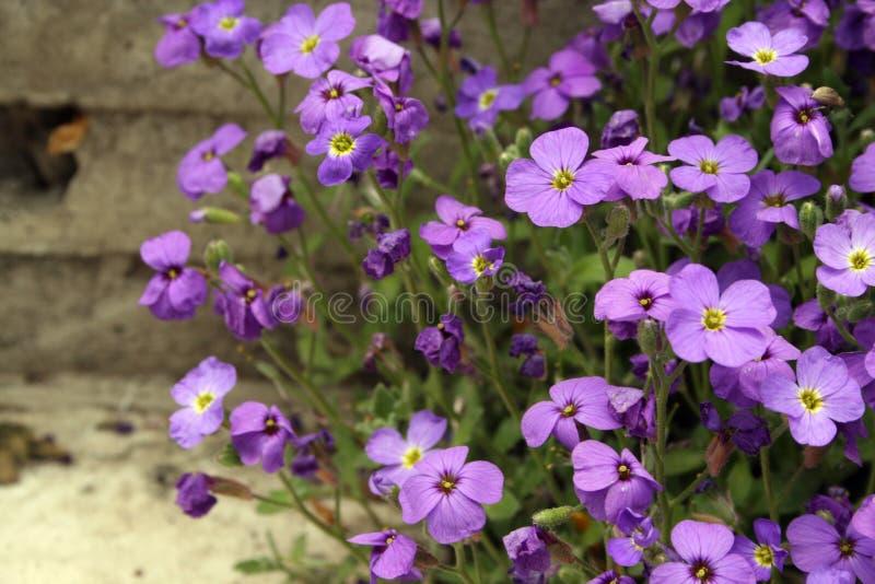 Download Violet flowers stock image. Image of flora, conceptual - 12191013