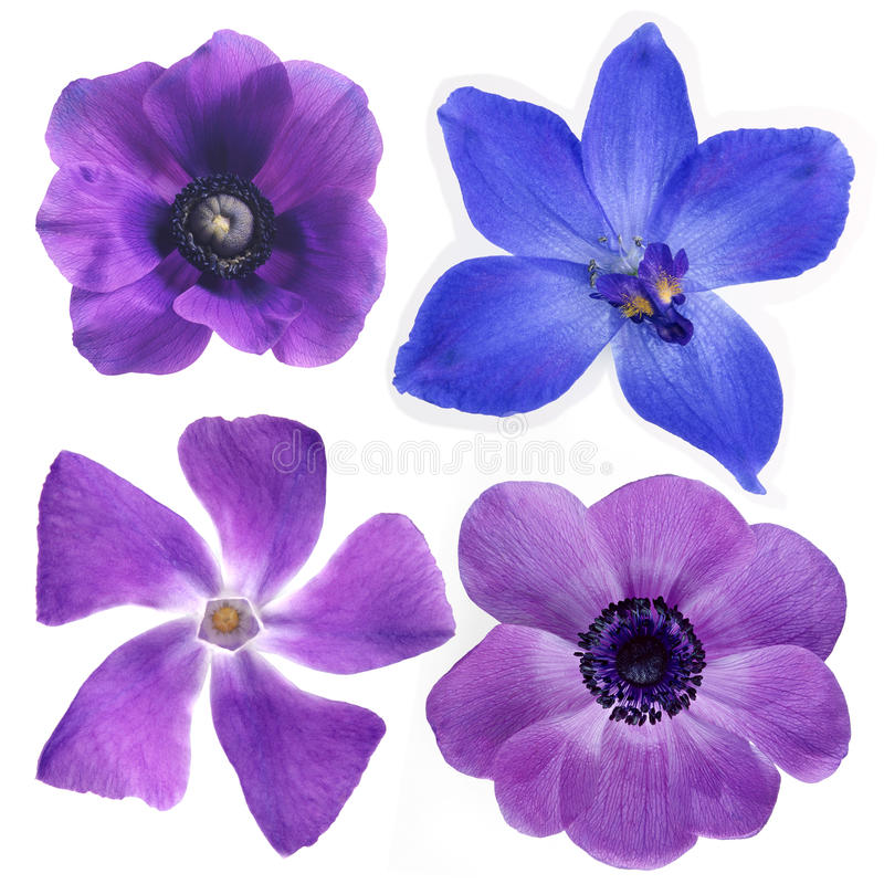 Download Violet Flowers Royalty Free Stock Photography - Image: 19767797