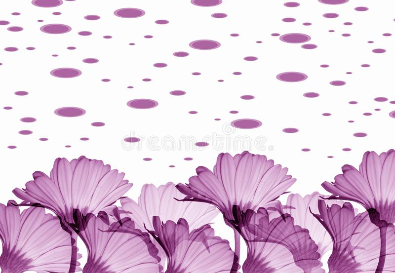 Download Violet Flowers Royalty Free Stock Image - Image: 9494726