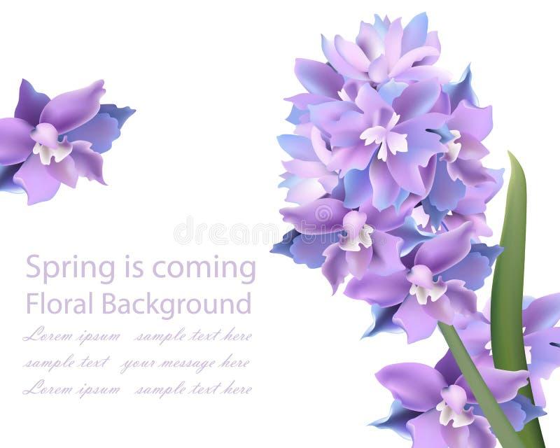 Violet flowers card. Spring background Vector. Illustration royalty free illustration