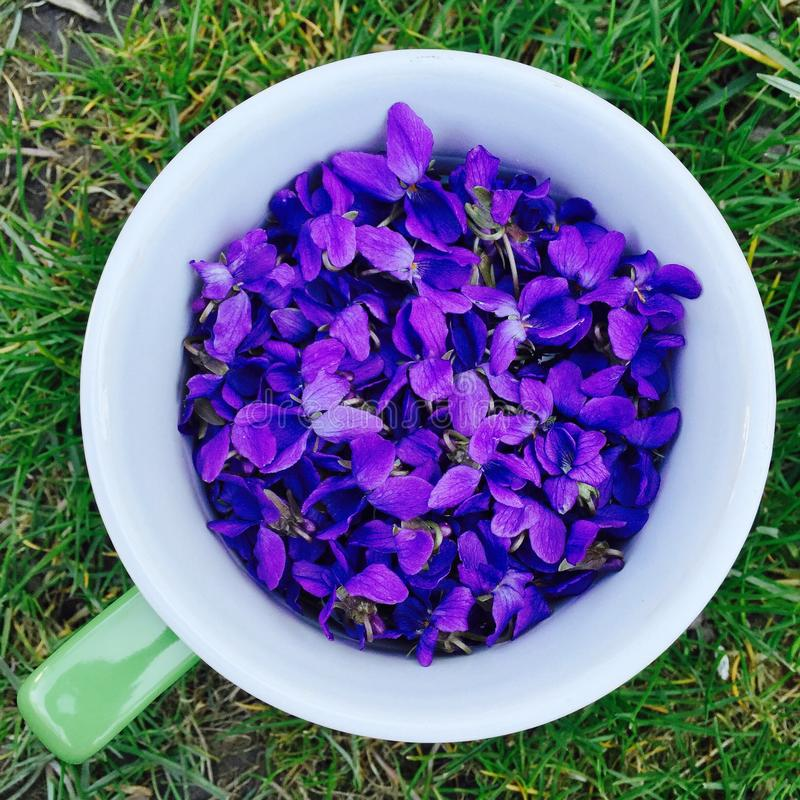 Spring Violet flowers in a cup. On green grass stock images