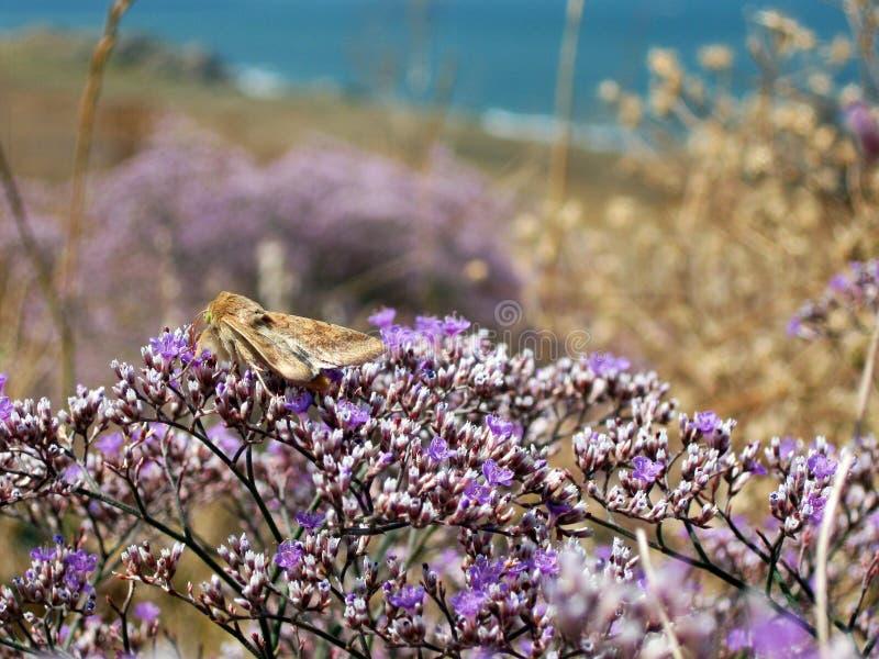 Macro of small wild violet flowers near sea stock photo