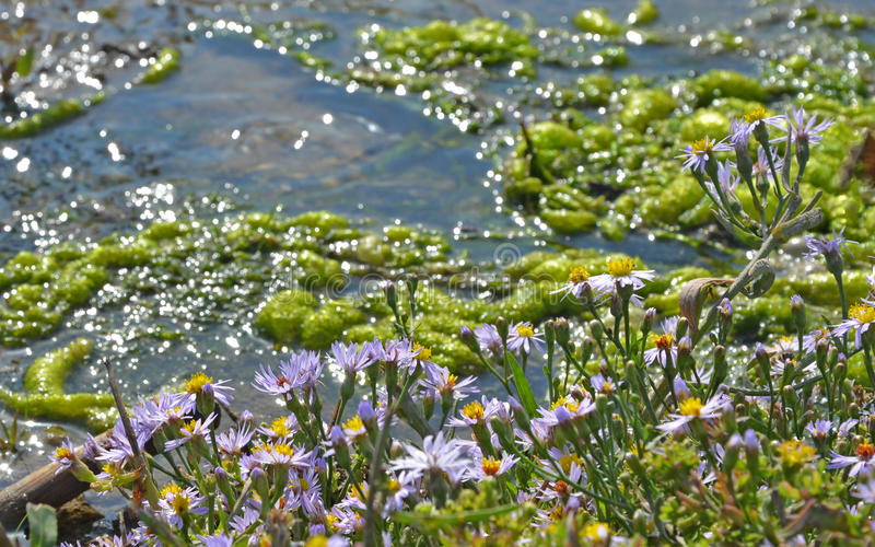 Download Flowers Near The Water Stream Stock Image