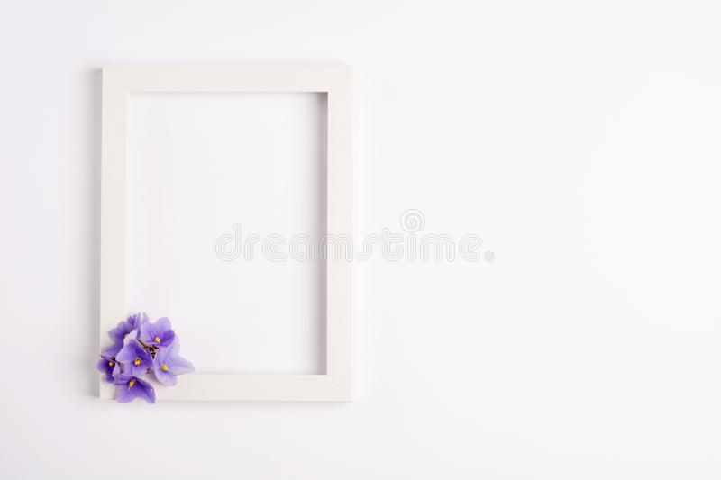 Violet flowers, photo frame on a white background. stock photography