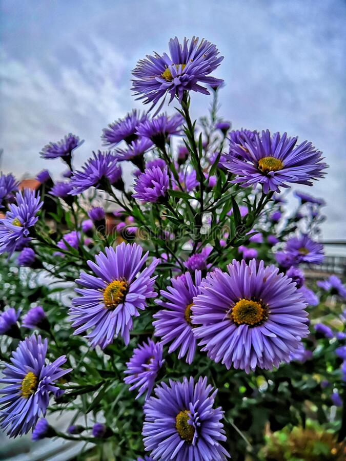 Violet flowers and sky stock image