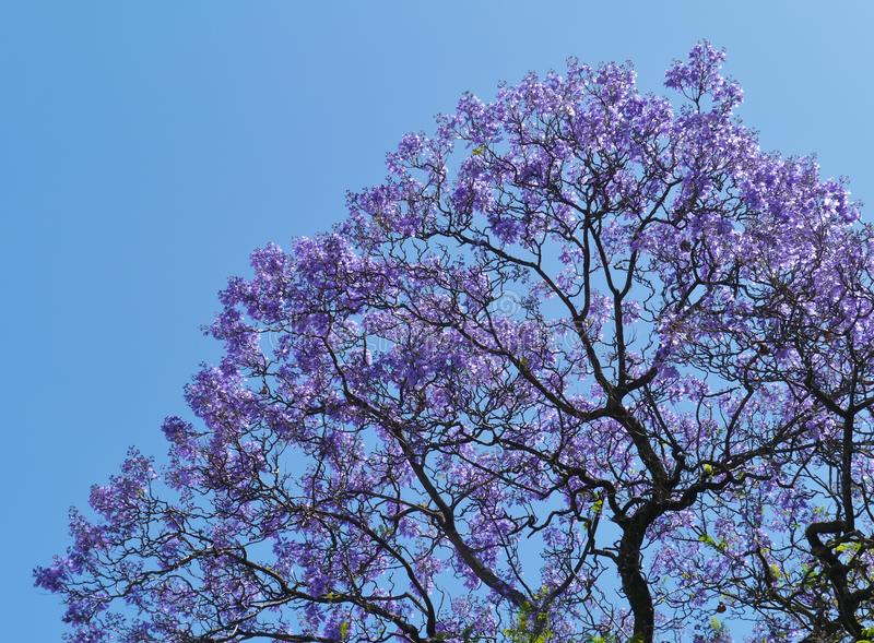 Violet flowers in a tree stock photos