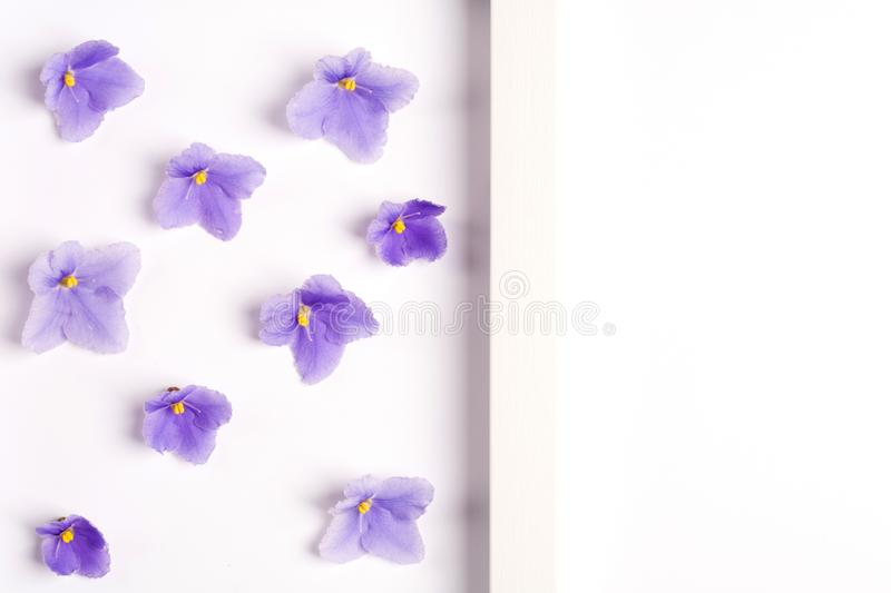 Violet flowers on a white background. royalty free stock images