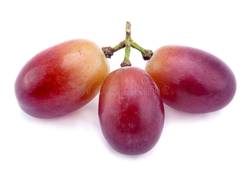 Violet grape berry. Violet grape fruit isolated on white stock photo