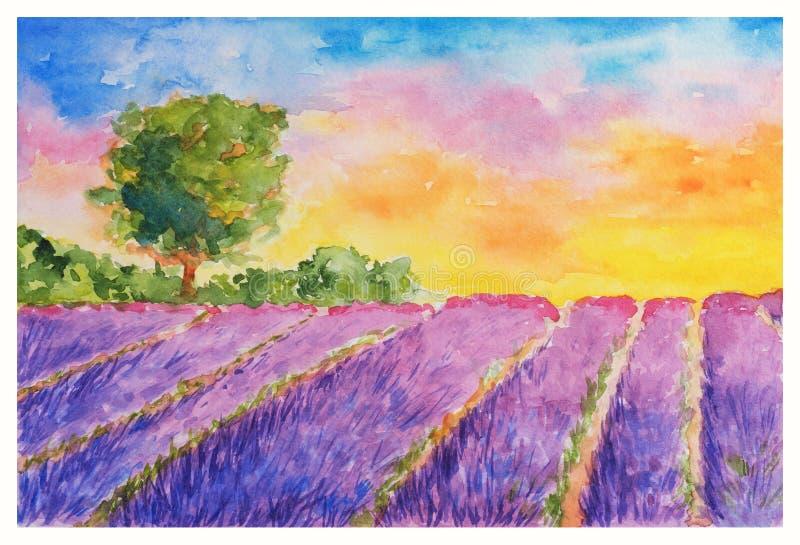 Violet Lavender Field rombante e sceglie l'albero al tramonto illustrazione di stock