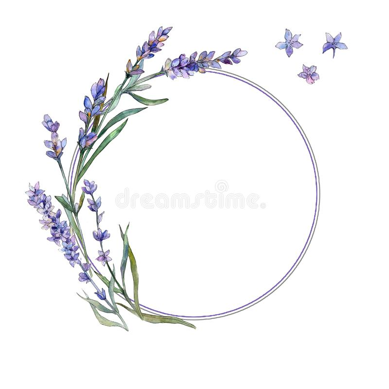 Violet lavender. Floral botanical flower. Frame border ornament square. royalty free illustration