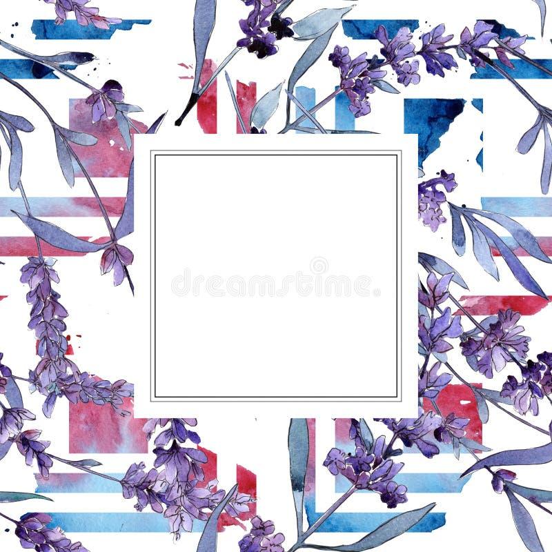 Violet lavender. Floral botanical flower. Wild spring leaf wildflower frame. Aquarelle wildflower for background, texture, wrapper pattern, frame or border royalty free illustration