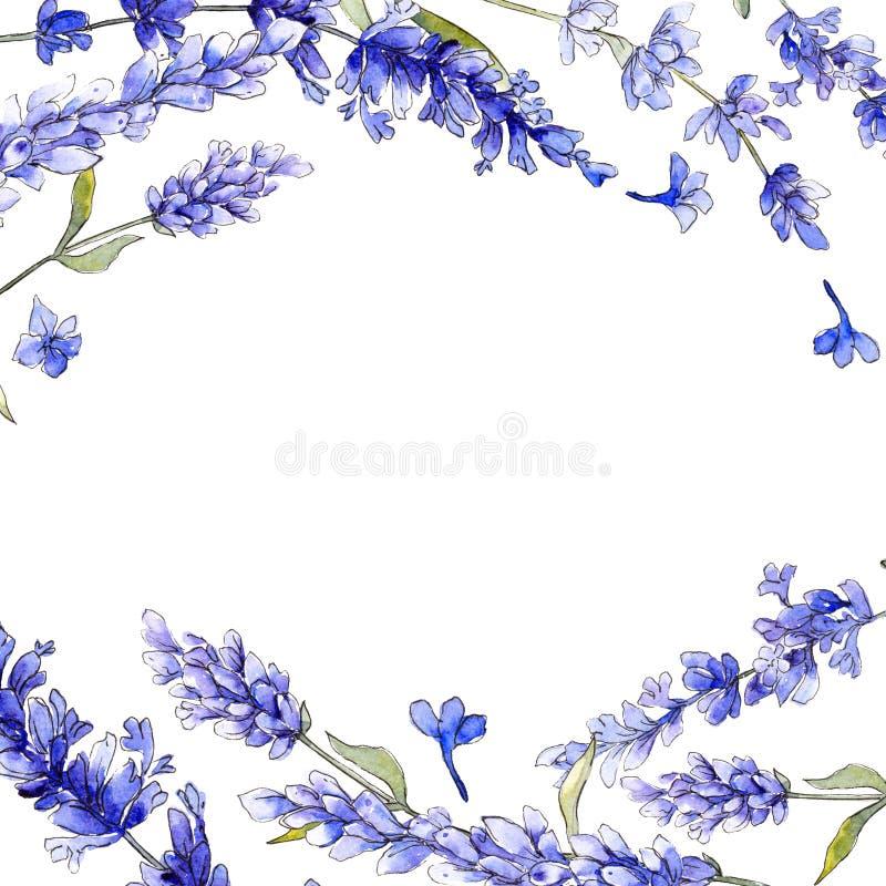 Violet lavender. Floral botanical flower. Wild spring leaf wildflower isolated. Aquarelle wildflower for background, texture, wrapper pattern, frame or border royalty free illustration