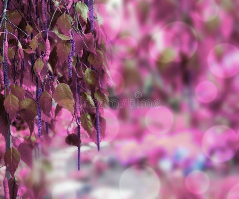 Violet Nature Background imagem de stock royalty free