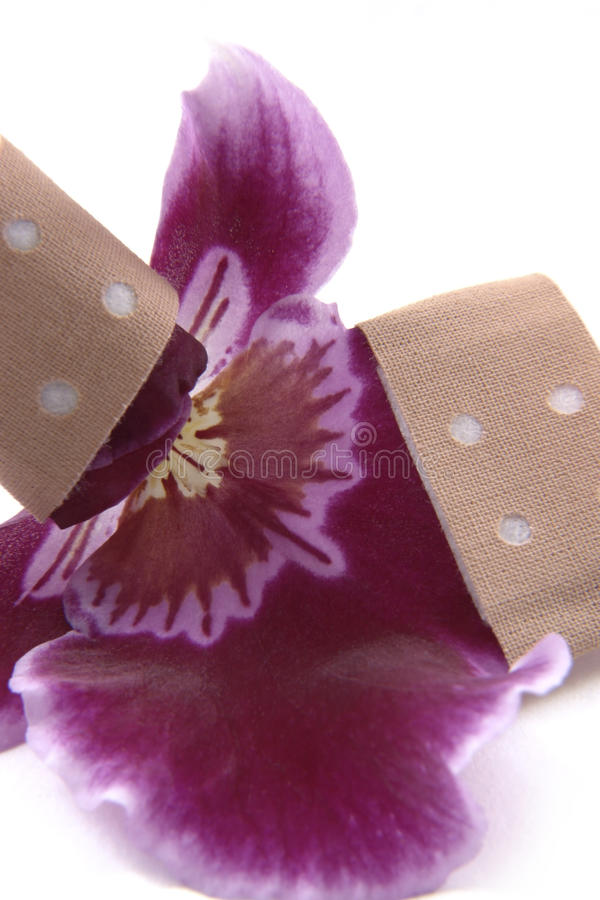 Violet orchid flower and adhesive tape stock image