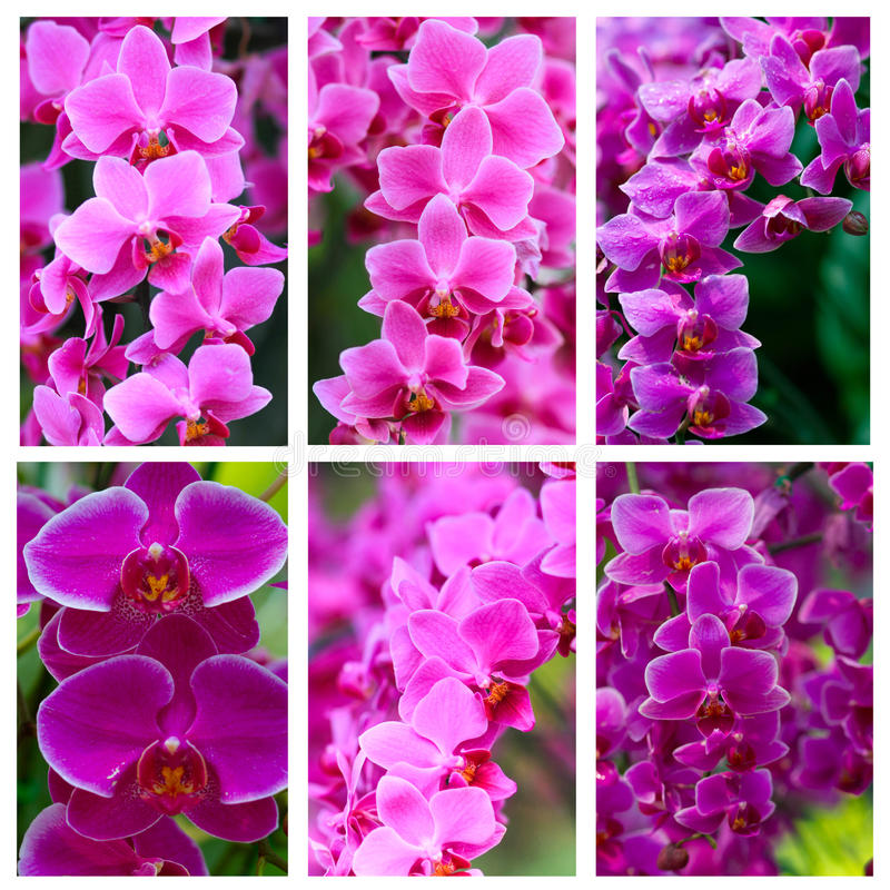 Violet Orchid Flowers stock images