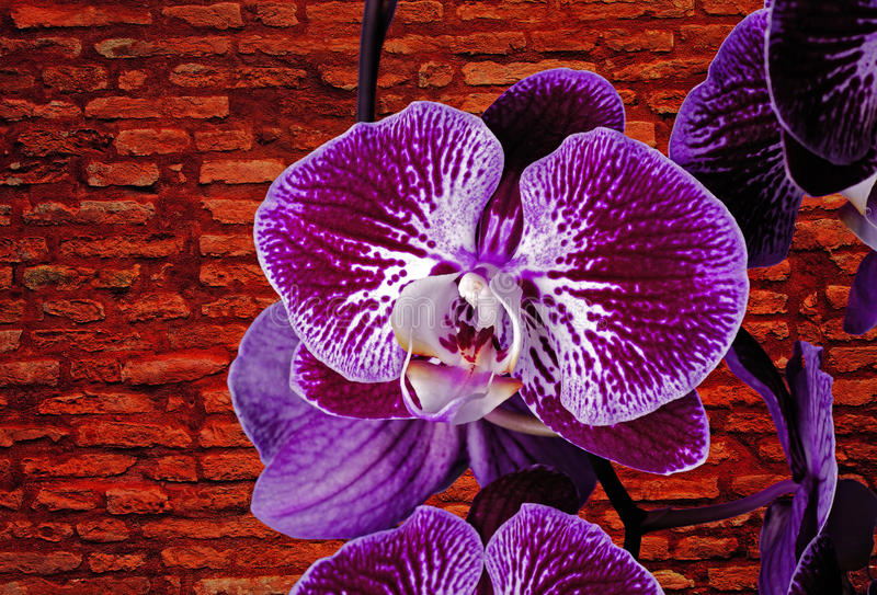 Violet orchids stock images