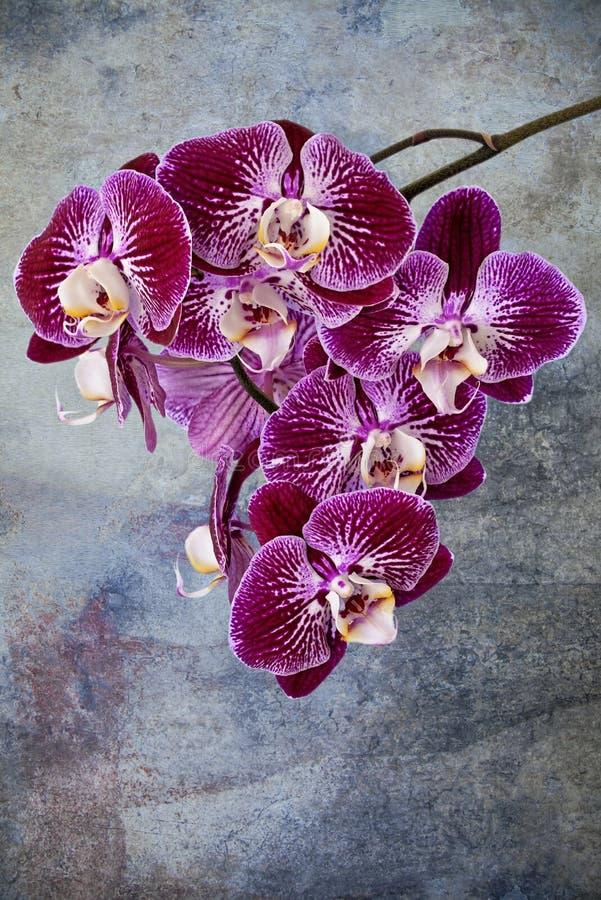 Violet orchids detail stock photo